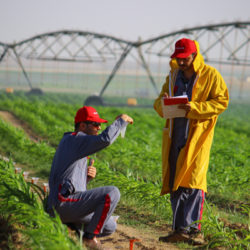 Irrigation Application Management